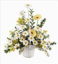 Daisies & Yellow Gerberas by Angel Lucys Funeral Florist - Victoria, TX